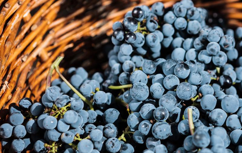 vinhos do dão